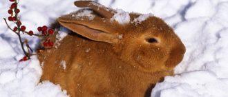 Кролиководство в домашних условиях как выбрать клетку