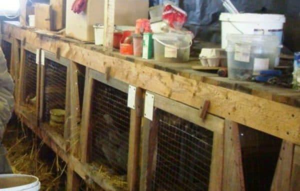 Клетки с кроликами в теплице
