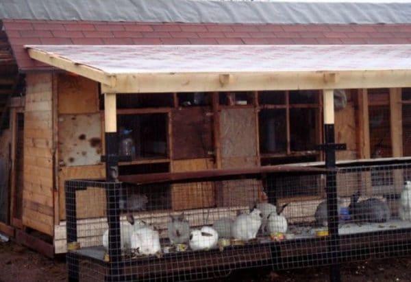 Содержание кроликов зимой в вольерах