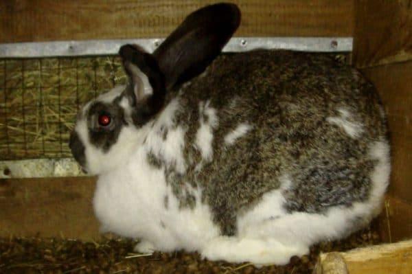 Кролики очень плодовиты