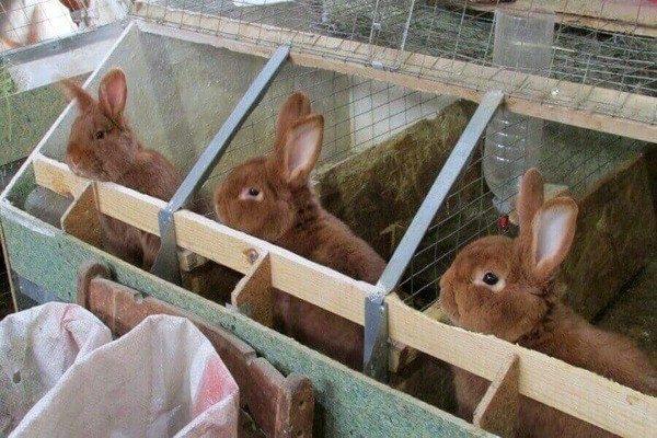 В помещении рядами установлены секции для отдельного проживания животных