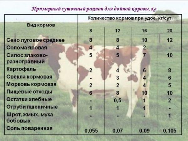 Суточный рацион дойной коровы