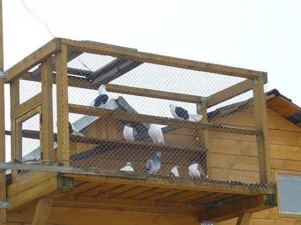 Навесная конструкция, пригодная для разведения небольшого количества птиц