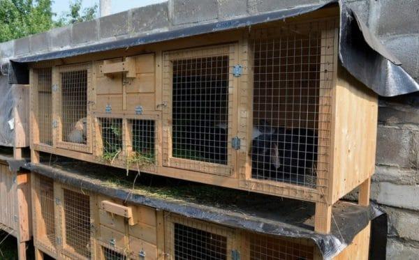 Для роста и быстрого размножения кроликов необходимо обеспечить для них комфортные условия