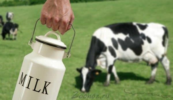 Присутствие глистов отрицательно сказывается на качестве молока