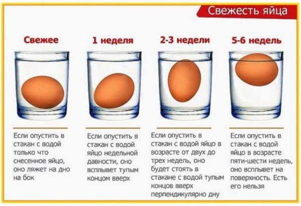 Проверка яйца на свежесть