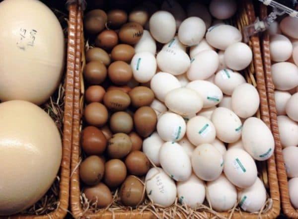 Перепады температуры значительно уменьшают срок годности яйца