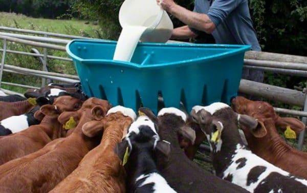 Заменитель по питательности идентичен натуральному молоку, в его состав входят дополнительные вещества, усвоение организмом происходит лучше