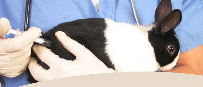 Кролиководство в домашних условиях прививки и заболевания