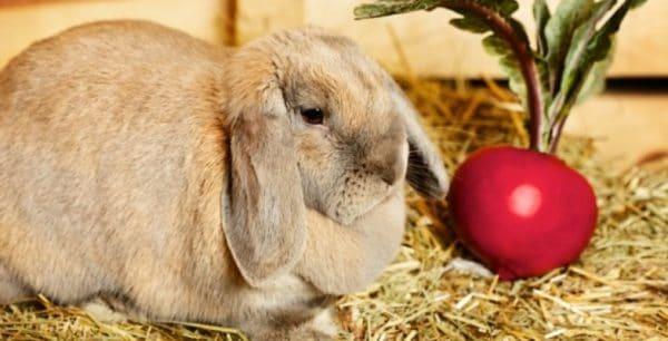 Почему для кроликов так важен правильный рацион