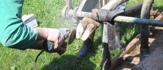 Годность молока при лейкозе коров и меры борьбы с болезнью