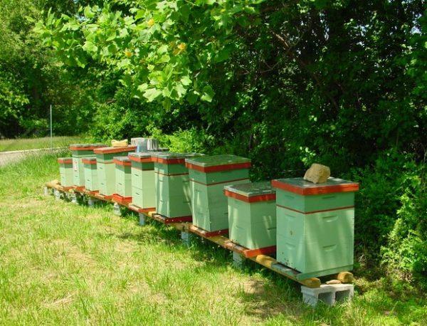 5 советов по уходу за пчелами для начинающих