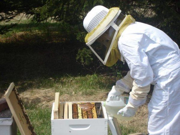 Что делать с пчелами после откачки меда