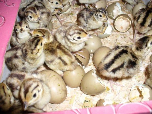 Правила отбора яиц