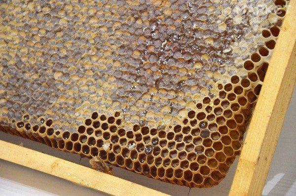 Можно ли есть пчелиные соты?