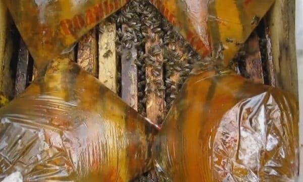 Когда кормить пчел на зиму и как