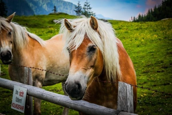 Сколько живут лошади в среднем