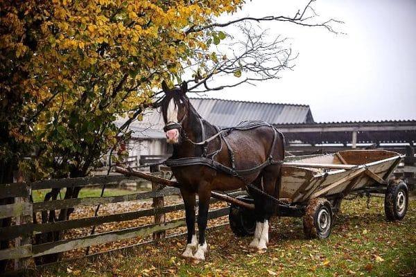 Скорость бега тяжелоупряжных коней