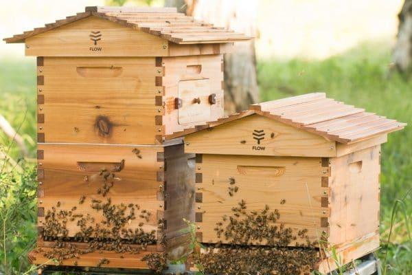 Сезонные изменения количества пчел в улье
