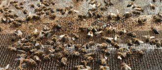 Земляные пчелы как добыть мед — Портал о стройке