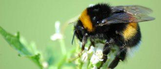 Как избавиться от пчел соседа, как отравить и отпугнуть, чего боятся