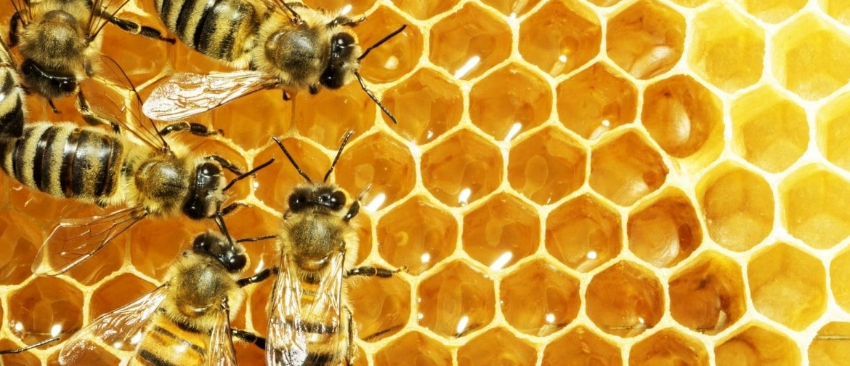 Можно ли есть воск из пчелиных сот