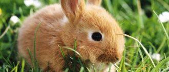 Кролик рекс что это за мех, особенности, характеристика, преимущества, сколько стоит шуба?