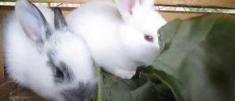 Кормление кроликов в домашних условиях для начинающих: чем и как кормить?
