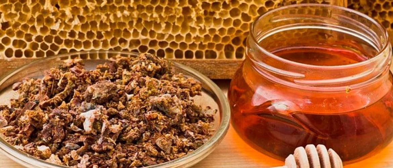 Из чего пчелы делают прополис