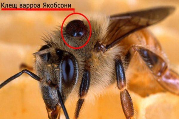 5 основных методов обработки пчел осенью