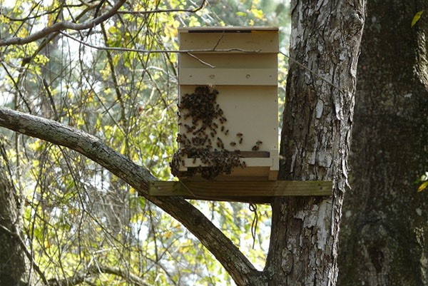 Выбор места и времени установки ловушки для пчел