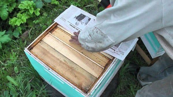 Объединение пчелосемей осенью через газету