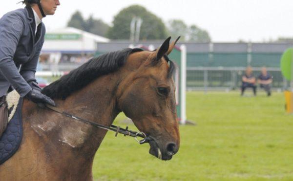 Что представляет собой уздечка и недоуздок для лошади