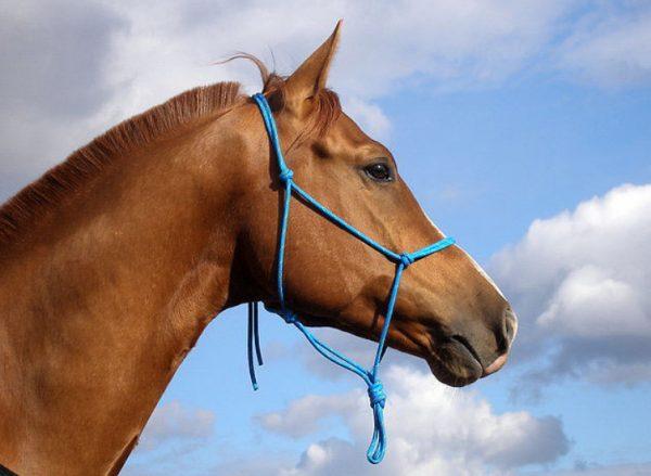 Недоуздок для лошади своими руками