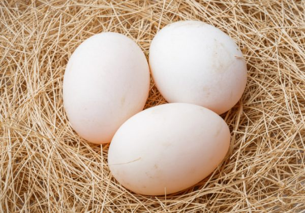 Какая температура для утиных яиц в инкубаторе?