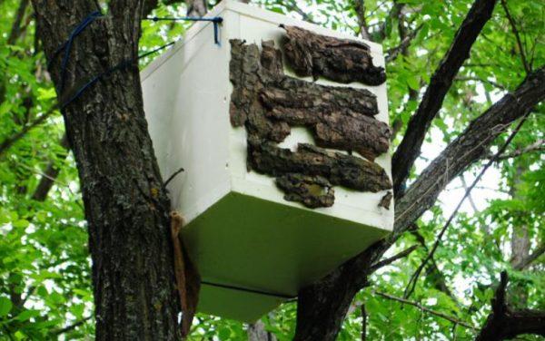 Принцип работы и конструкция ловушки для пчел