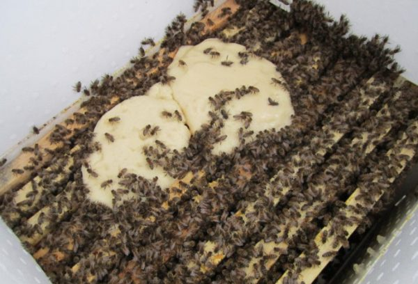 Подкормка пчел осенью сахарным сиропом: сроки, особенности, рецепты приготовления