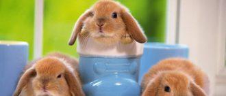 Как мыть и купать кролика в домашних условиях