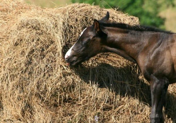 Как правильно организовать питание лошади