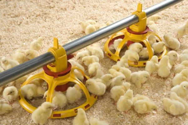 Система фазового кормления цыплят-бройлеров