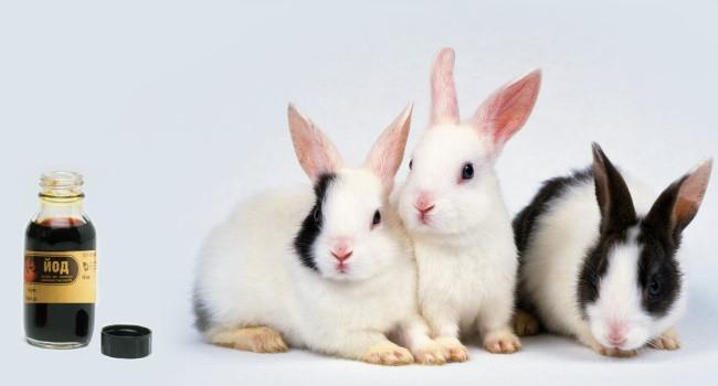 Как правильно давать и разводить йод для кроликов: советы ветеринара