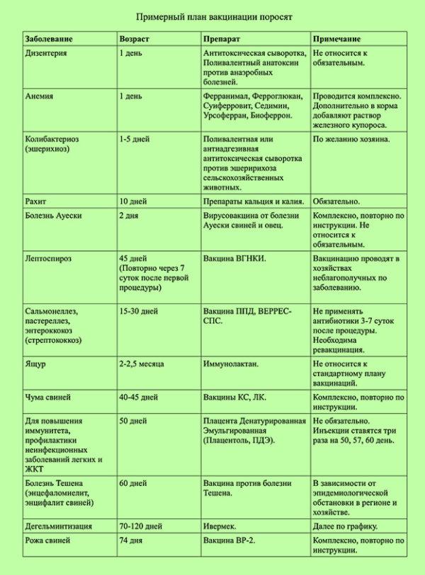 вакцинация поросят